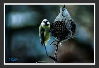 Photo: In einigen Bundesländern werden Insekten im Wald deutlich intensiver bekämpft. Benutzt werden dazu Insektizide, die meist mit dem Hubschrauber versprüht werden. Der Bruterfolg von Singvögeln kann durch die Mittel erheblich beeinträchtigt werden, wenn Insekten und Amphibien sterben, von denen die Vögel sich und ihren Nachwuchs ernähren (Schönfeld 2009). Für Fledermausarten sind solche Auswirkungen ebenfalls möglich. Per Hubschrauber gesprüht/ bzw. verspritzt, wird der Sprühnebel sehr großräumig verweht. Die Abdrift ist bei vergleichbaren Bedingungen und bei Verwendung der besten verfügbaren Anwendungstechnik etwa 100-fach höher als bei Bodengeräten im Weinbau und 300- bis 400-fach als im Ackerbau. Die Mittel sind giftig für Fische und Fischnährtiere und wurden als bienengefährlich (B1/SPe 8) eingestuft.