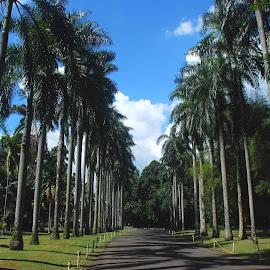 palm trees by Adjie Tjokrosoedarmo - City,  Street & Park  City Parks ( palm trees, cloudscape, botanical, garden,  )