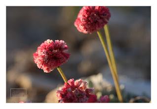 Photo: Eastern Sierras-20120715-275