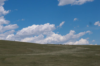 Photo: Cows grazing on the skyline.
