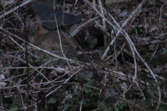 Photo: konijn met jong