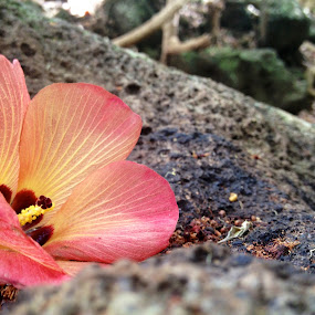 Im right where I need to be by Benjamin Salazar - Flowers Single Flower ( orange, red, rock, hawaii, flower )