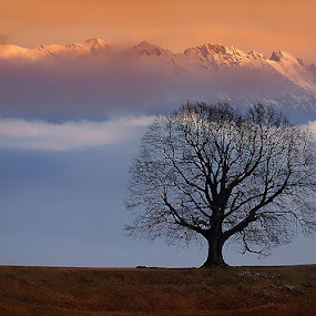 Alone by Uroš Florjančič - Landscapes Mountains & Hills