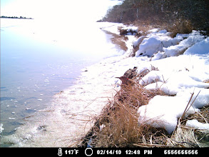 Photo: Can you see the Northern Flicker here in the middle?