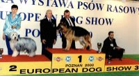 Photo: European dog show Poznan, Poland 2000 Res. BEST IN SHOW JUNIOR