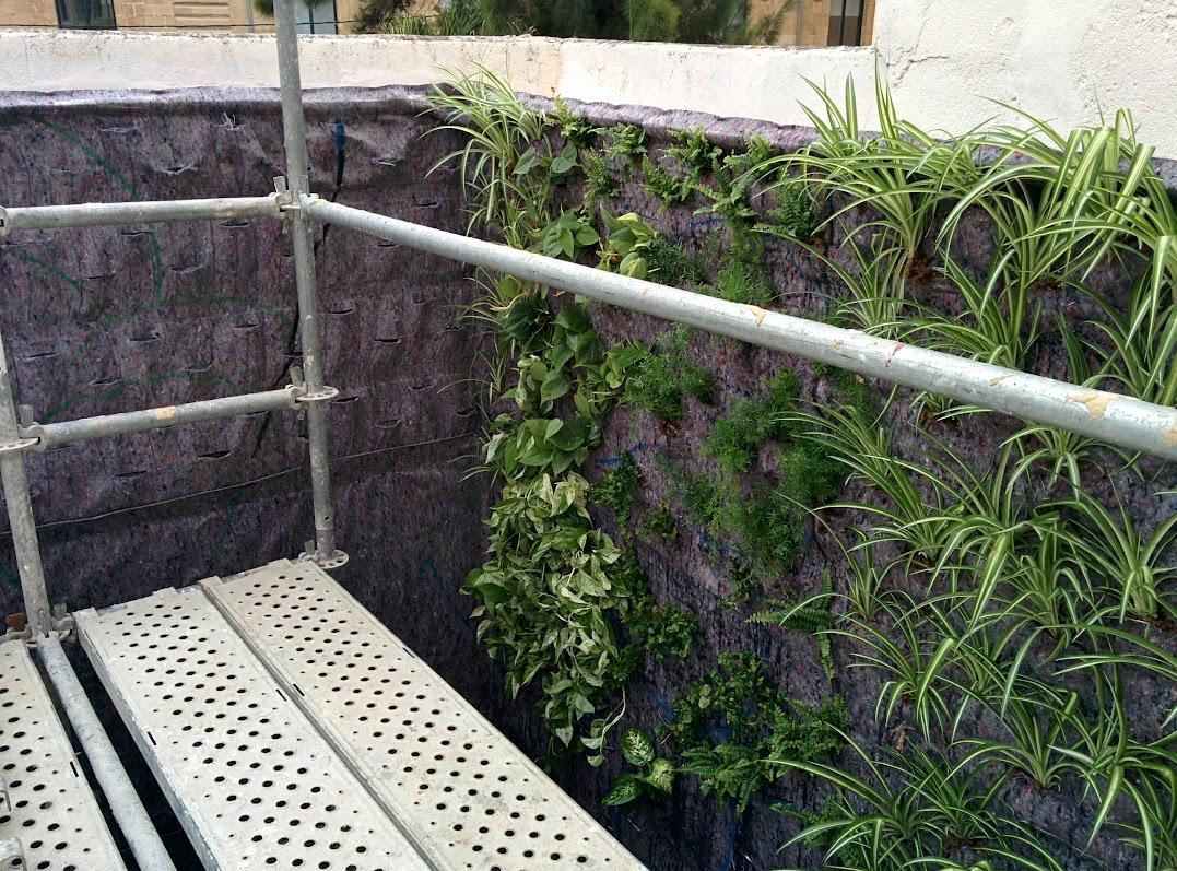 Vertikale Gärten auf Mallorca