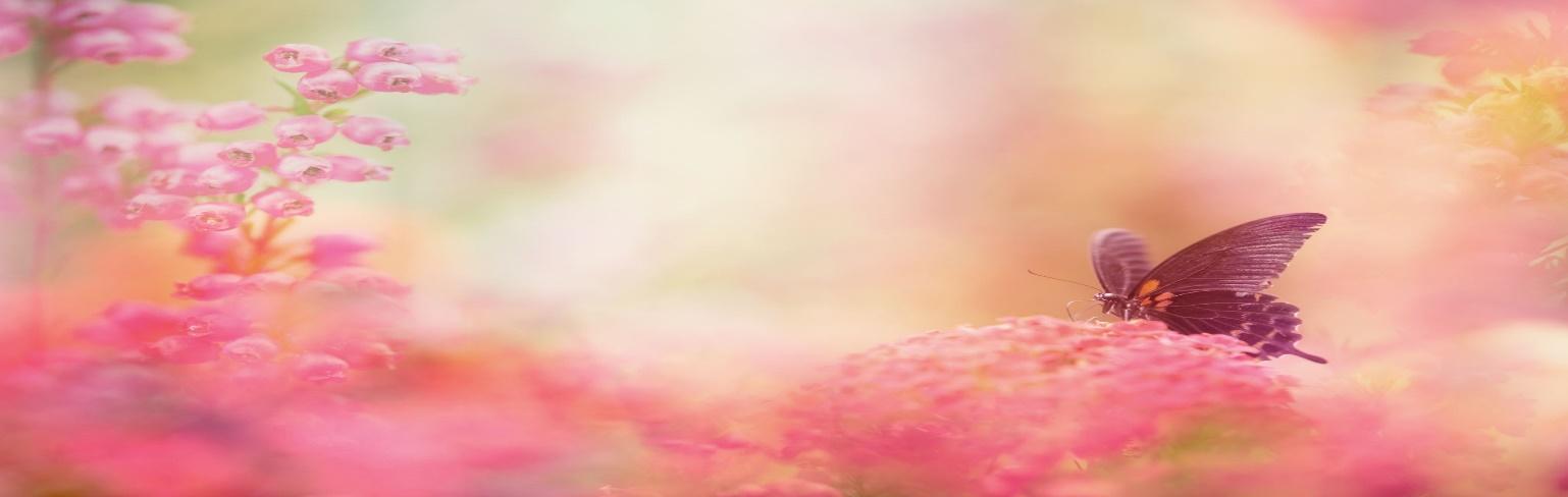 Butterfly landing on pink flowers