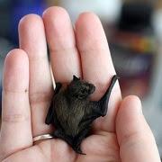 Приметы про летучую мышь