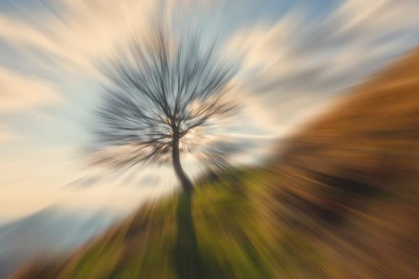 Tree di Heisen22