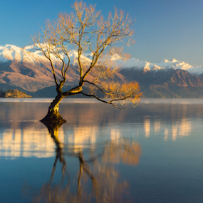 The Lonely Tree and The Snow Remarkables ... by Anupam Hatui - Landscapes Waterscapes ( wanaka, reflection, tree, waterscape, the remarkables, lake wanaka, landscape, new zealand,  )
