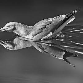 by Eseker RI - Black & White Animals (  )
