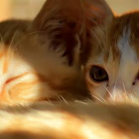 Dont Disturb Me by Hsn Doel - Animals - Cats Portraits