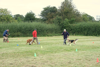 Photo: Anne and Gretl Golden Retriever X heading towards their 1st prize in Spoon Race Slalom!