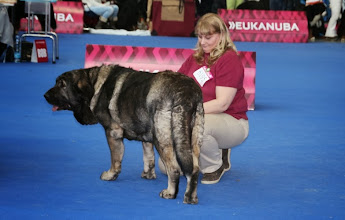 Photo: champion class females Qwendy Mastibe - exc. 1, CAC, res. CACIB * 28.6.2010 Astone del Dharmapuri x Goya Mastibe
