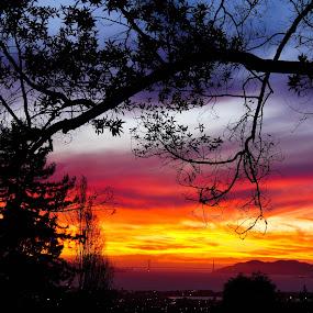 Sunset behind the bridge by Mehdi Laraqui - Landscapes Sunsets & Sunrises ( orange, golden gate bridge, red, silhouette, trees, sunrise, bridge, san francisco., landscape, black, sun, city )