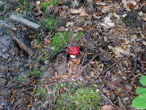 Photo: Wszystkie grzyby są jadalne. Z tym, że niektóre tylko raz