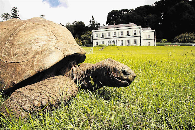 Jonathan, the famous giant tortoise at Plantation House on St Helena.