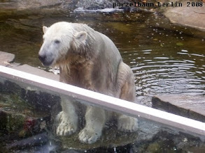 Photo: Knut wartet auf den Ballrueckwurf ;-)
