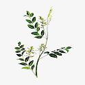 中医植物百科全书 icon