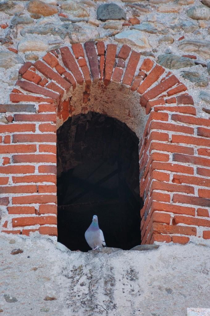 Cucù.... no piccione...... di Federico Faletto