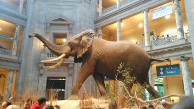 Photo: Музей естественной истории