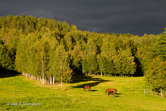 Photo: Evening sun in the grazing yard, after the sun has finally broken through the cloud cover