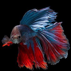 fish48.jpg