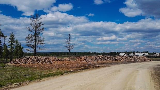 В поселке Ягодный залежи заготовок дров, справа пилорама