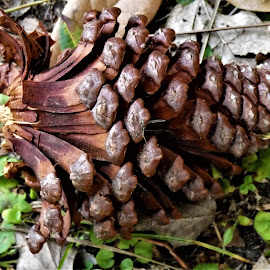 by Denise O'Hern - Nature Up Close Other Natural Objects