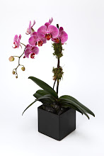Photo: Hot Pink Orchid Plant