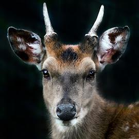 by Stanley P. - Animals Other Mammals (  )