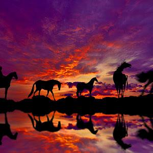 horsesinsunrisewreflection.jpg