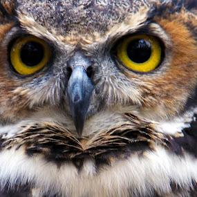 by Silvana Schevitz - Animals Birds ( tagged birds )