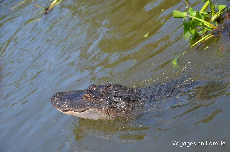 gators swamp tour