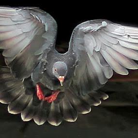 FREEZE................. by RIO DJOENED - Animals Birds