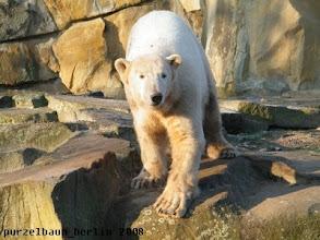 Photo: Knut schaut kurz nach seinen Besuchern...