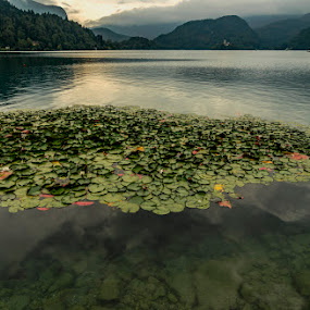 Lake Bled by Dilip Ghosh - Landscapes Waterscapes ( landscape )