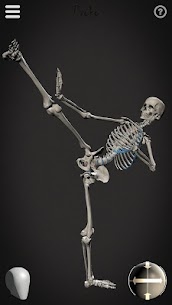 Skelly MOD (Cracked): Poseable Anatomy Model 3