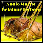 App Audio Master Belalang Terbaru APK for Windows Phone