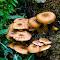 Mushrooms-31.jpg