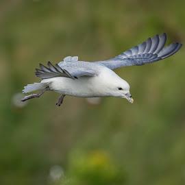 by Colin Whitcombe - Uncategorized All Uncategorized ( bird )