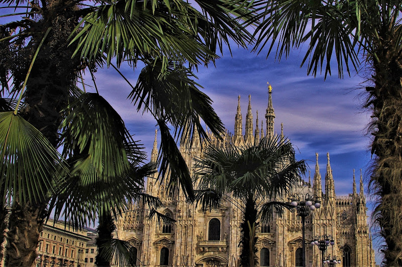 Dietro le palme....il Duomo di DMax