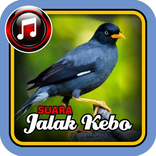 Suara Jalak Kebo Google Play Ko Aplikazioak