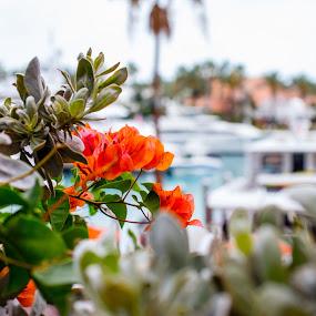 Atlantis Beauty 2 by Debbie Jones - Nature Up Close Trees & Bushes ( condo, paradise island, nassau, atlantis, bahamas,  )
