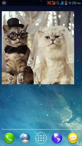 Kitty Widget|玩個人化App免費|玩APPs