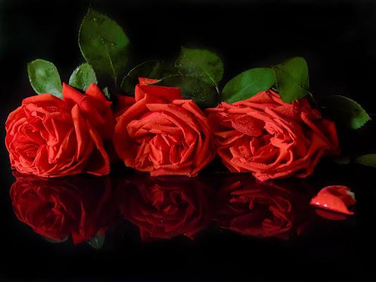 tre d'amore di PaolaPlinia