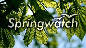 Springwatch thumbnail