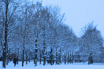 Photo: Memory of Winter Snow Trees at University of Oslo  冬の思い出 オスロ大学の雪の木