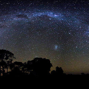 Milky way over Redgums by Gill Fry - Landscapes Starscapes ( milkyway, stars, trees, night, gill fry, nightscape, milky way,  )