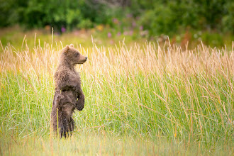 Photo: I can't get enough of standing bears